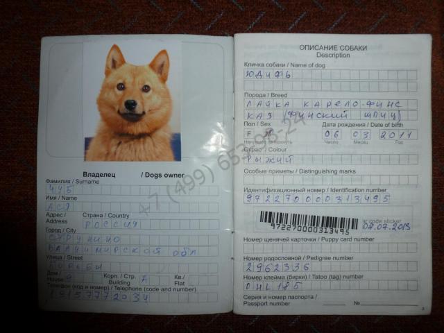 Купить ветеринарный паспорт за 3999 рублей в Москве
